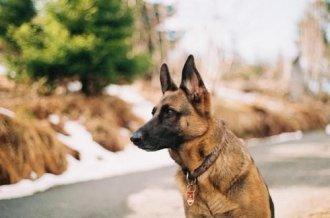 כלב השמירה שלכם